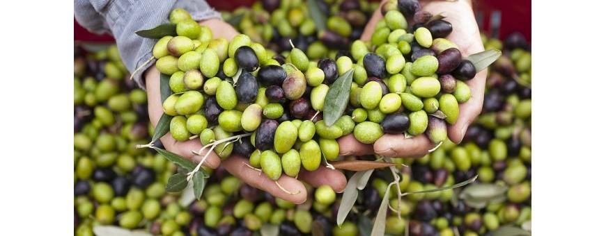 Olive e Specialità Liguri