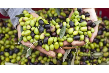 olive taggiasche, pesto ligure, specialità liguri