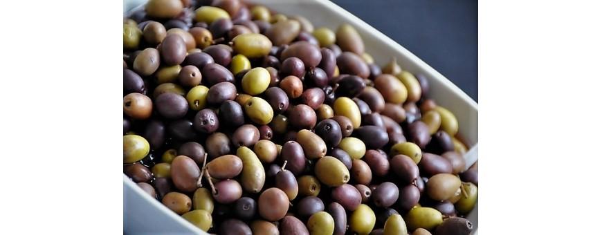 Organic Taggiasca Olives in Brine